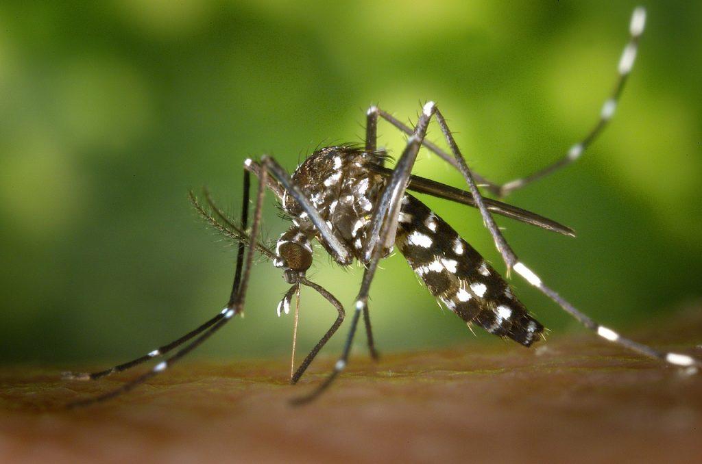 3 sposoby zwalczania komarów